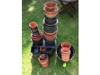 Plant pots, various sizes. FREE