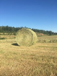 Hay for sale. Round bales