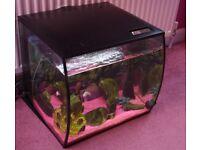 Fluval Aquarium + Accessories £130 ono