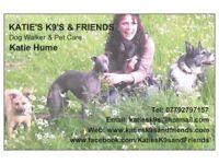 Katie's K9s and Friends 🐾, Dog Walker