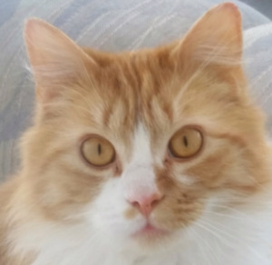 free one year old  cat needs  tlc  home