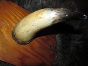 Genuine cow horn on plaque
