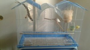 Birds with cage