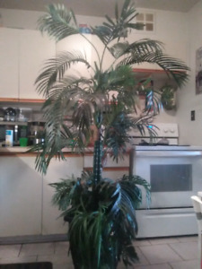 Artificial palm tree 7 feet tall