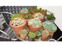 Various Succulents available