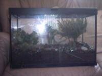 small vivarium with plants