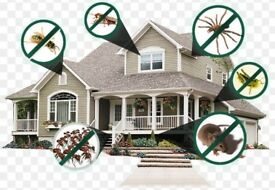 Pest control Bedbugs Mice Rat wasps flies Ants Cockroaches Exterminators