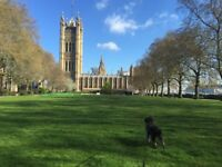 Dog Walking & Pet Sitting in Westminster, Pimlico, Chelsea