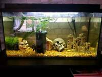 Bargin 3ft fish tank