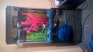 40 gallon tall fish tank