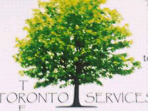 TORONTO  TREE    OFFERING  SPECIALS TREE CARE. TREE SERVICES