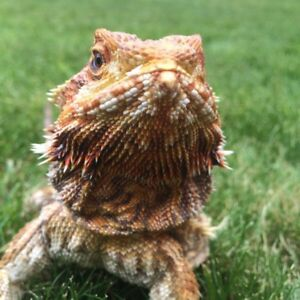 Lots of Reptiles need to go! Urgent!