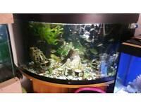 350 litre jewel tank