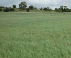 Arable land for lease - Cobourg area