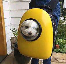 Wanted to buy pet backpack