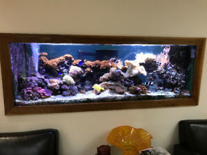 Glass Aquarium, Sump, Stand, Lights and Cabinet