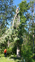 Tree removal, Storm damage call 705 294 1314