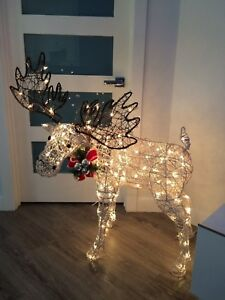 Beautiful lighted moose