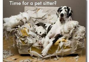 Pet Services, boarding, walking, sitting, P breaks,