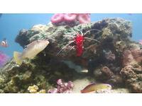 Marine fish for sale