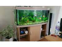 Fishtank 500 litters plus stand and light