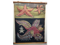 German Antique/Vintage Nature/Marine Starfish School Education Poster/Picture/Chart PRICE LOWERED