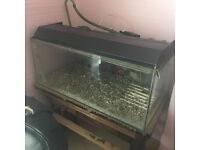 Fish Tank With Working Filter