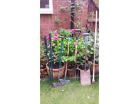 6 Gardening Tools