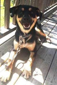 KLAWS: FOUND pup, Mill Line Rd,Nogie's Creek,Bobcaygeon