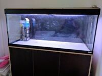 120cm x 40cm x 55cm Fish tank including lights and filter