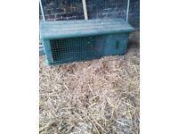 Plastic rabbit hutch