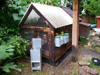 Chicken coop with 6 bantam leghorn chickens.