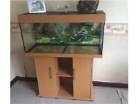 3.5 ft aquarium