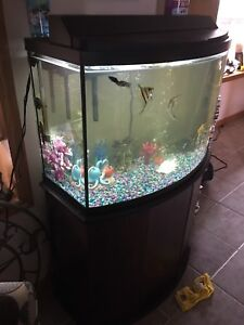 Fish tank- with everything and fish
