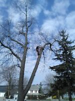 Tree Removal and Tree Trimming Windsor Lasalle Amherstburg