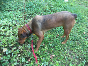 1 and half year-old female dog to rehome,  only $850