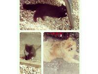 4month old kitten needing forever home