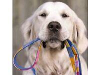 Dog walking service