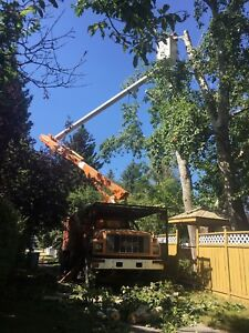 Tree removal and bin for rent