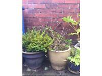 Job lot of garden plants and pots