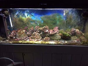 Aquarium eau salé 55 gallons 400$