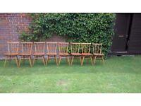 Ercol All Purpose / Stickback Chairs model 391 Quantity 8