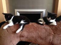 2 gorgeous kittens ready now