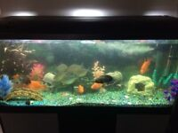 Large 4ft fish tank with under cabinet