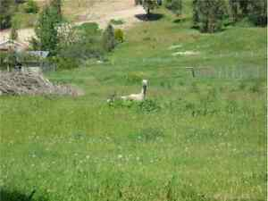 Build in KELOWNA on 2 ACRES - FOR SALE