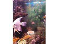 2 tropical fish tanks