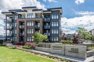 $1200 / 1br  - 1bedroom condo for rent (langley)