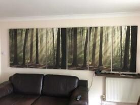 NEXT FOREST CANVAS X6