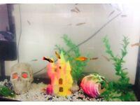 Aquarium and fish cold water