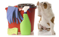 Pet Friendly House cleaning & Small business